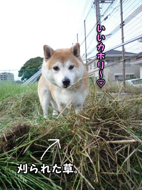 18日ブログ6.jpg