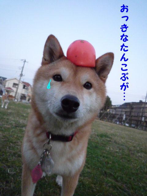 21日ブログ2.jpg