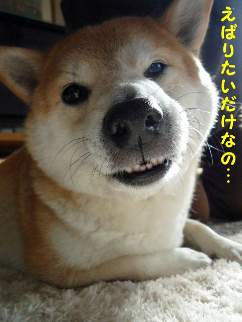 26日ブログ11.jpg