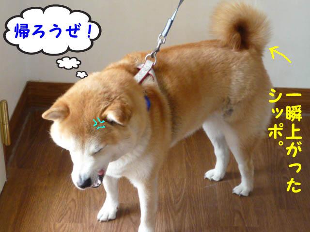 28日ブログ11.jpg