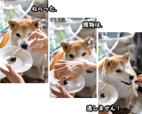 30日ブログ8.jpg