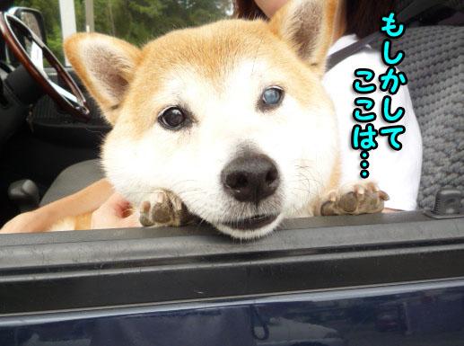 8日ブログ11.jpg