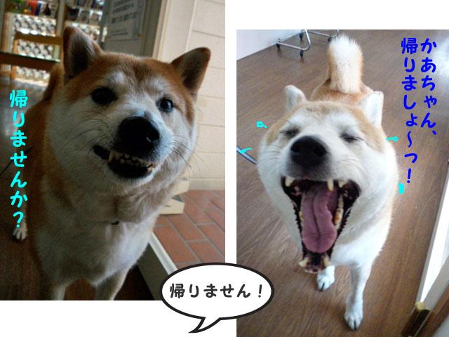 9日ブログ6.jpg