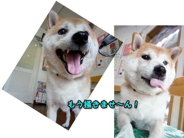 9日ブログ7.jpg